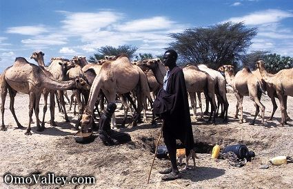A Shepard of the Turkana Tribe with camels in Kenya